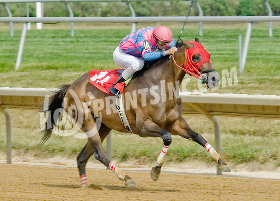 Halo Hollie winning at Delaware Park on 7/11/12