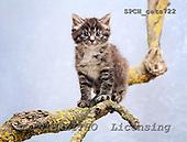 Xavier, ANIMALS, cats, photos+++++,SPCHCATS722,#a# Katzen, gatos