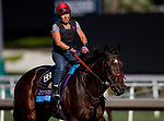 OCT 24: Breeders' Cup Juvenile  entrant Dennis' Moment, trained by Dale L. Romans, gallops at Santa Anita Park in Arcadia, California on Oct 24, 2019. Evers/Eclipse Sportswire/Breeders' Cup