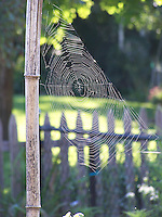 Photos of Spider Webs, August, 2011