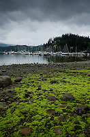 Sea weed covered rocks against the background of clouds and trees in Deep Cove, Vancouver, British Columbia, Canada.