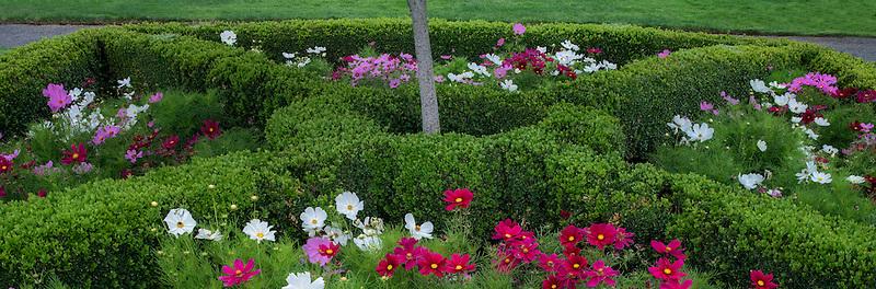 Mixed poppies. Oregon Garden. Silverton, Oregon