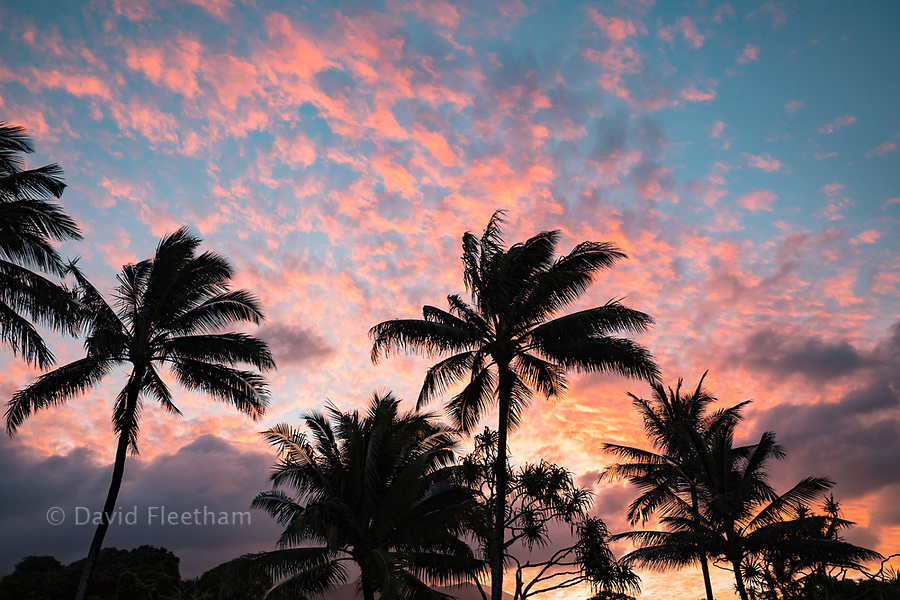 Palm trees near Hana are in silouhette with sunset colors on clouds in the sky, Maui, Hawaii.