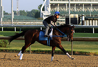 LOUISVILLE, KY -MAY 28: Tenfold, ridden by Angel Garcia, gallops at Churchill Downs, Louisville, Kentucky, in preparation for June 9 Belmont Stakes in New York. (Photo by Mary M. Meek/Eclipse Sportswire/Getty Images)