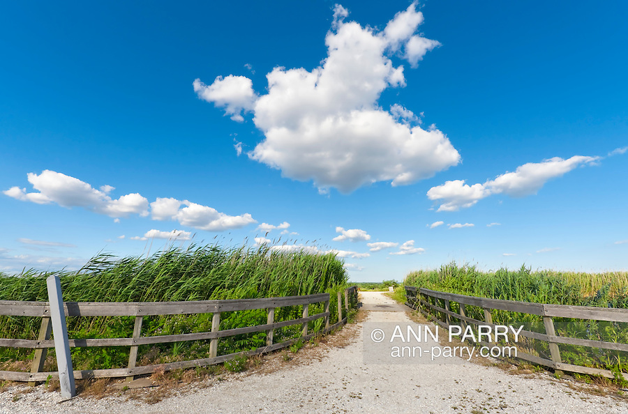 Stone pebble Path between Two Curving rustic wood fences surrounding reeds around two marsh ponds, though only slight glimpse of one pond visible. Ultra wide angle view of beautiful blue sky with white clouds. (Not digitally altered.)