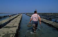 Europe/France/Pays de la Loire/85/Vendée/Ile de Noirmoutier/Jean-Paul Frioux (ostréiculteur) dépose des poches - Huîtres de Vendée-Atlantique (AUTORISATION N°57)