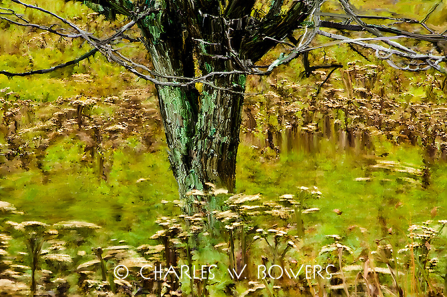 Have you ever just watched a natural meadow sway with the falls winds? The rhythm can be mesmerizing lulling you into a place that removes all your cares. This natural meadow in Tucker County has that effect on me.<br />