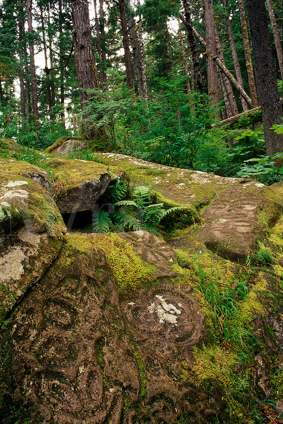 Petroglyphs in rainforest above Thorsen Creek, Bella Coola, BC, Canada