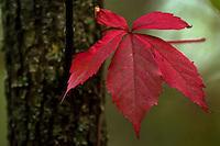 Fall foliage, Central New York.