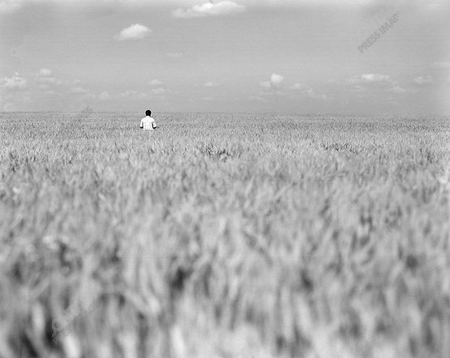 Alexander Almazov, deputy director of the Agro-Invest holding near the town of Stanovoye, Lipetsk region, stood in some of the wheat fields on the 20,000 hectare holding. Russia, July 15, 2008.