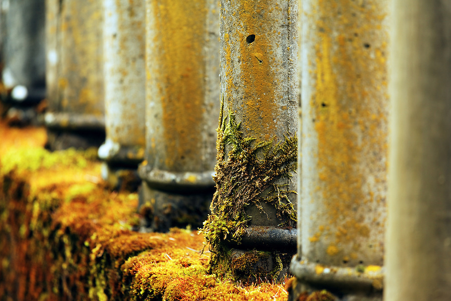 Lichen and moss covered balusters on bridge over Shepperd's Dell, Historic Columbia River Highway, Columbia River Gorge National Scenic Area, Oregon, USA