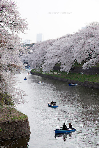 Tokyo, Japan - People enjoy Cherry blossoms on the boat at Imperial Palace Area. Cherry blossoms bloom 10 days earlier than usual year along the Imperial Palace Area. This Sunday, March 24, 2013, university students attend graduation ceremony at Nippon Budokan and mixed with visitors to take pictures of Cherry blossoms along Kitanomaru Park & Chidorigafuchi. (Photo by Rodrigo Reyes Marin/AFLO)..