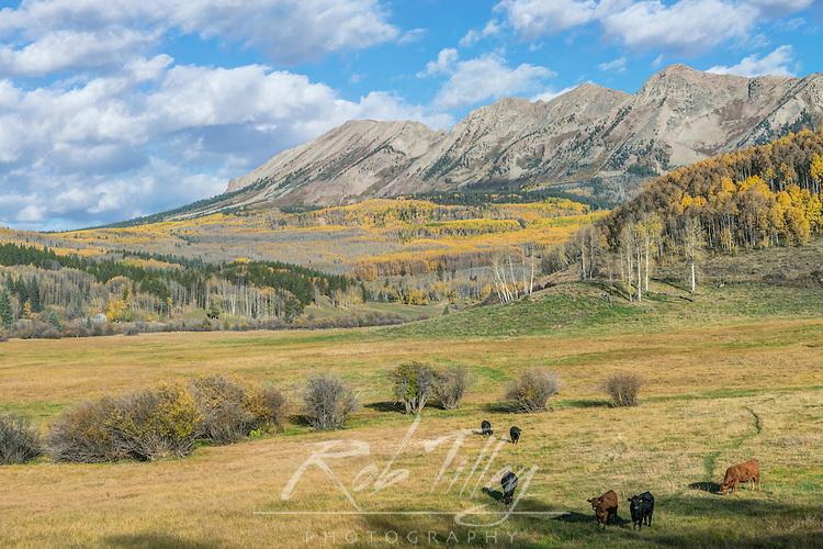 US, CO, near Gunnison, Rocky Mountain Autumn Ranch