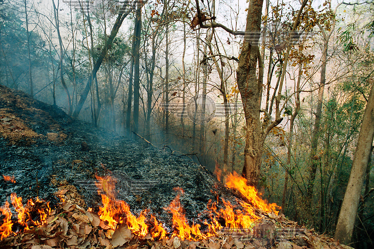 During the dry season the north west of Thailand is often hit by extensive bush fires. Most are started by farmers who want to clear parts of the forest for agricultural use. The fires often get out of control.