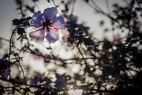 A single purple flower, one among many, backlit by a sun providing a muted sunburst at the bottom of the frame.