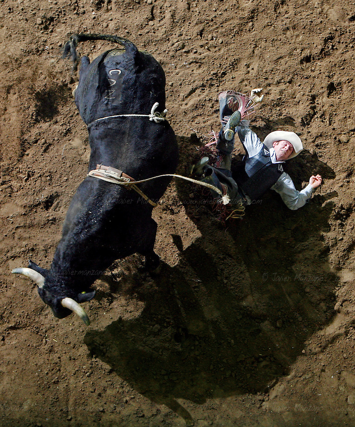 Josh K. Johnson (cq) from Douglas, WY takes a tumble off his bull at the Bull Riding event at the National Western Rodeo Finals in the Denver Coliseum on Sunday, January 27, 2008..(JAVIER MANZANO / ROCKY MOUNTAIN NEWS).Josh K. Johnson (cq).........