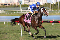 HALLANDALE BEACH, FL - FEBRUARY 11: Dickinson (KY) #8 with jockey Paco Lopez on board, wins the Suwannee River GIII Stakes at Gulfstream Park on February 11, 2017 in Hallandale Beach, Florida. (Photo by Liz Lamont/Eclipse Sportswire/Getty Images)