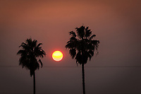 The sun, bracketed by palm trees, glows orange, filtered through smoke filled skies over a San Francisco Bay area neighborhood.