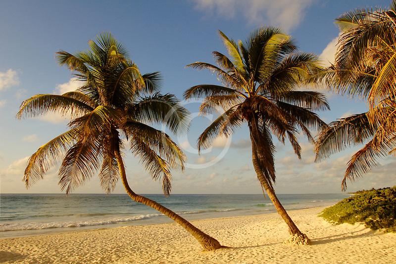 Mexico, Riviera Maya, Tulum, Palms on the beach