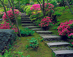Portland, OR<br /> Stone steps and flowering azaleas on the mossy hillside of The Natural Garden, The Japanese Garden, Washington Park