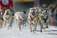 Musher Micho Konno and dog team at the start of the oldest continuously run sled dog race in the world, the 2003 Open North American Sled dog championships which start on the Chena River in downtown Fairbanks, Alaska. The annual race consists of three daily races, the combined fastest time wins.