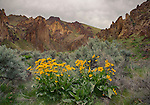 Oregon, Southeast, Jordan Valley. The red rock formations of Leslie Gulch in spring with arrowleaved balsamroot.