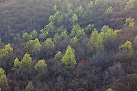 Trees in the Blue Ridge Mountains.