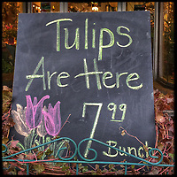 First sign of spring is tulips for sale?