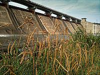 Weeds growing in rocks beneath Hoover Reservoir