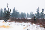 Boreal forest and bog in winter, Riding Mountain National Park, Manitoba, Canada