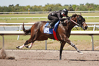 #119Fasig-Tipton Florida Sale,Under Tack Show. Palm Meadows Florida 03-23-2012 Arron Haggart/Eclipse Sportswire.
