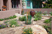 Drought Tolerant Garden, Atwater Village, Los Angeles, California, USA