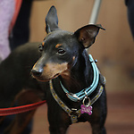Puppy Class @ Dogue 25 April 2015