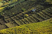 Europe/France/Languedoc-Roussillon/66/Pyrénées-Orientales/Banyuls-sur-Mer: vignoble AOC Banyuls - Vigne en terrasse