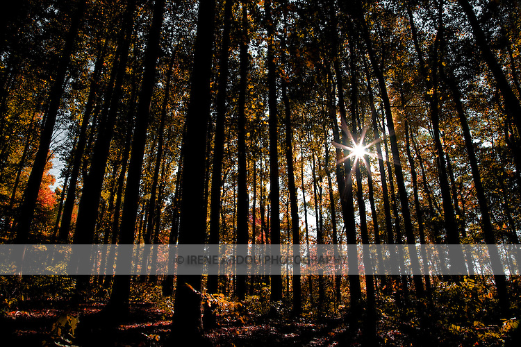 The afternoon sunlight filters through tall, autumn-tinged tree leaves in Shenandoah National Park's Blue Ridge Mountains of Virginia.  A small aperture (f/20) renders the circular sun into a pointed star.