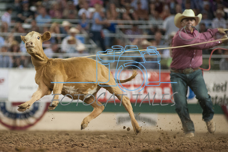 Ace Slone from Cuero, Texas runs after a roped calf in the Tie-Down event during the final night of Reno Rodeo on Saturday, June 28, 2014.<br /> (Photo By Kevin Clifford)