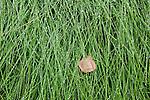 Detail of dew on grass, Denali National Park, Alaska, USA