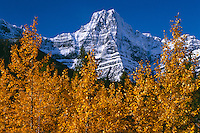Black cottonwoods,  Waterfowl Lakes<br />   and Howse Peak,  Icefields Parkway<br /> Banff National Park,  Rocky Mountains<br /> Alberta,  Canada