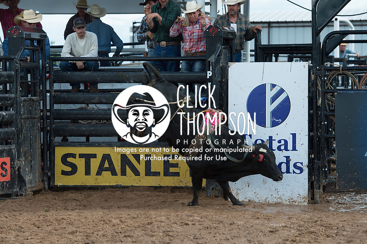 Davis Rodeo 410 of Davis Rodeo Ranch/ Johnson/ Tillman during the American Bucking Bull, Incorporated event in Decatur, TX - 6.3.2016. Photo by Christopher Thompson