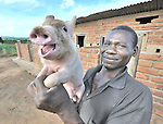 McDonald Ndhlovu with one of his pigs in Zombwe, in northern Malawi.