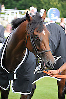 03.08.2013 Goodwood, England.  during day five of the  Glorious Goodwood Festival. winner of the Fairmont Nursery Stakes Shot in the Sun ridden by Samantha Bell trained by Richard Fahey