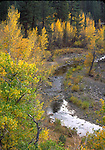 East Fork of Carson River in autumn