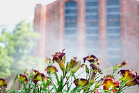 Lilies growing near Mississippi State's Chapel of Memories enjoy water from the sprinklers on the first day of summer.<br />