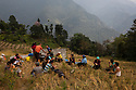 India - Sikkim - Villagers having a lunch break after a morning spent harvesting rice. Villagers help each other in turn so that fields can be harvested quicker.
