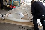 Skilled craftsman building model whale skeleton, Ecomare, Texel, Netherlands,