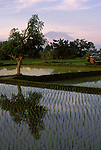 Rice Paddies and Mt. Agung, Bali, Indonesia, photo bali201, Photo Copyright: Lee Foster, www.fostertravel.com, 510-549-2202, lee@fostertravel.com., food, plant, field, planting, crop, mountain, pond, scenic, agriculture, paddy, paddies, water, landscape, verticlal