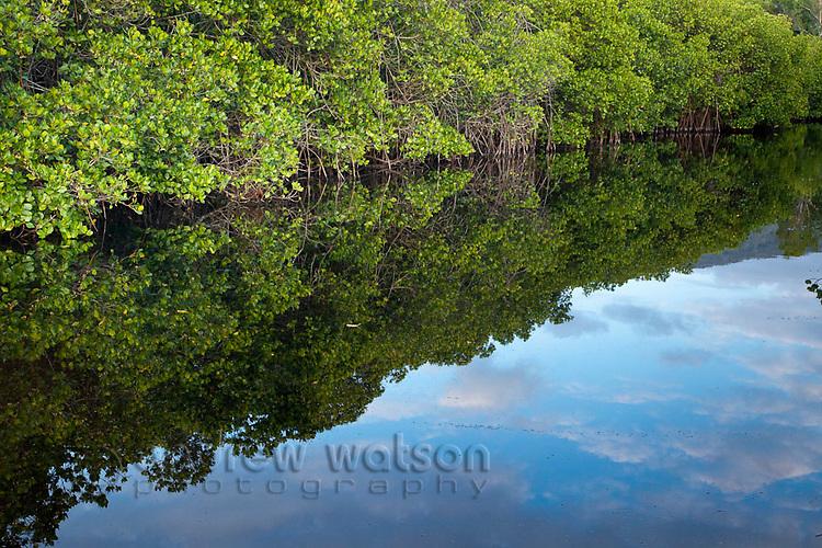 Mangrove lined waterway.  Kewarra Beach, Cairns, Queensland, Australia