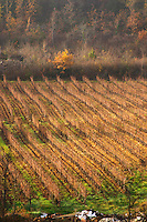 near Magrie Limoux. Languedoc. France. Europe. Vineyard.