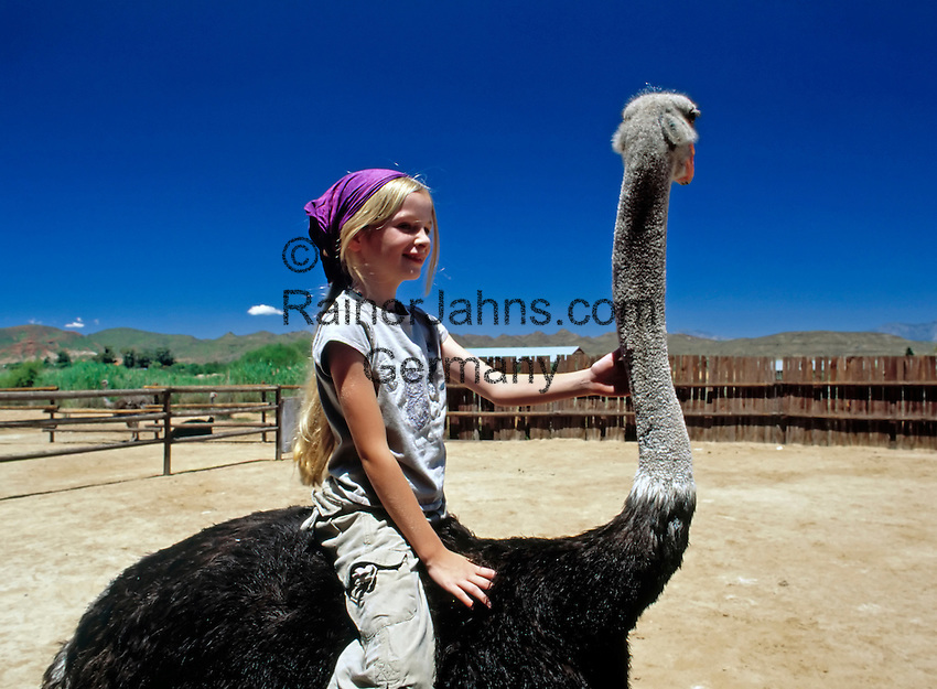 South Africa, Southern Cape, near Oudtshoorn: Safari Show Farm, ostrich ride