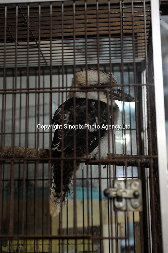 A Kookaburra for sale (pice unknown) at the Noah Inner City Zoo, a pet shop that sells exotic animals. The Noah Inner City Zoo is a pet shop that sells exotic animals. The 'zoo' claims to have more than 300 species for sale, many of which are rare and some are endangered.